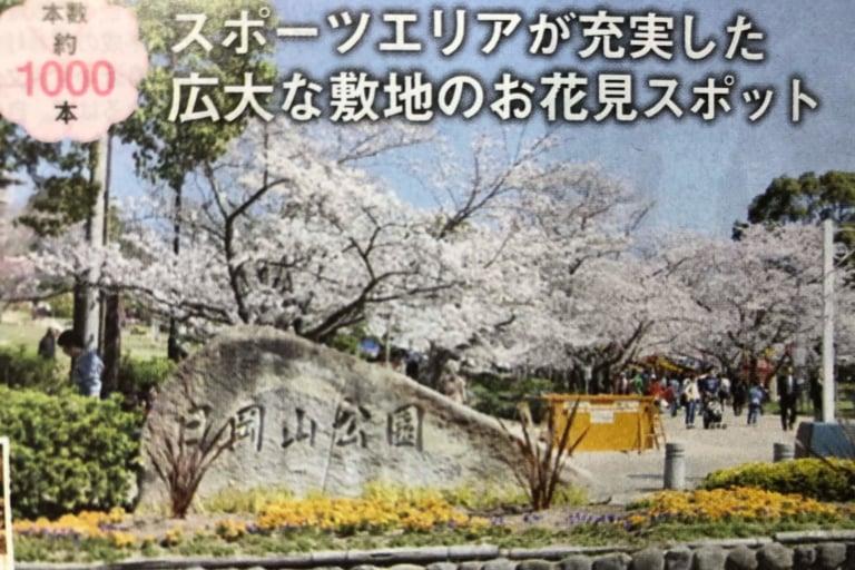 日岡山公園の桜